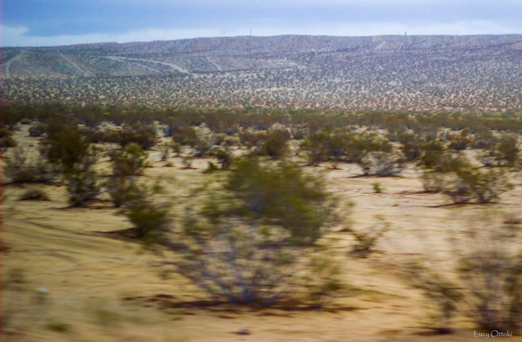 Désert du Mojave33
